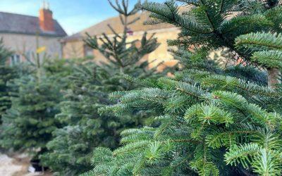 CHRISTMAS TREES- Real vs Fake??!