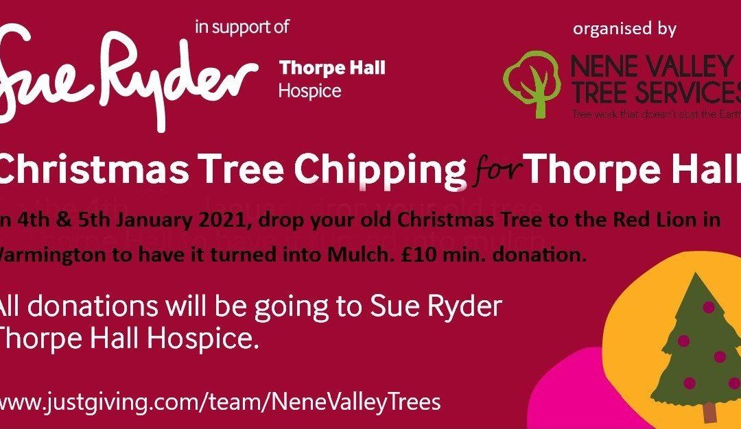 Christmas Tree-Cycling for Sue Ryder